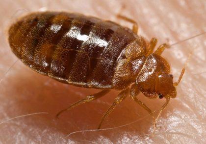 beg bug removal Charlotte