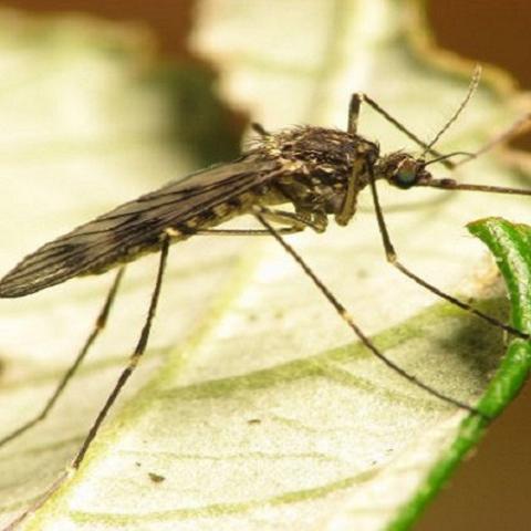 LoneStar tick Crown pest control