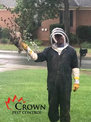 Wasp Control Monroe